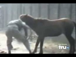 horse attacks man