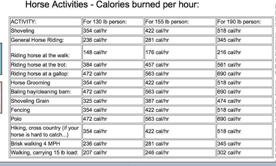 Calories Burned Per Hour Doing Horse Activities The