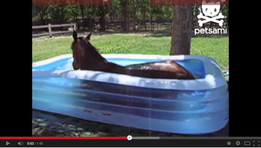 Watch this horse play in a kiddie pool a great time to for Pool time pools