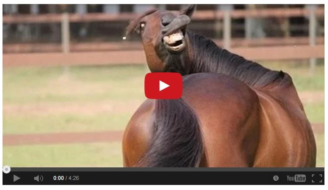Watch Funny Horse Videos That Will Crack You Up! – The
