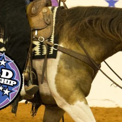 7 New Classes and Even More Fun Added To APHA World Show Schedule – Qualifying Waved