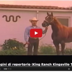 Mr San Peppy – Watch Rare Video Of This Legendary Stallion – AQHA Hall Of Fame