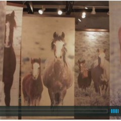 Strong Women and Wild Horses – Freedom Lost And Found – A Must Watch Video!
