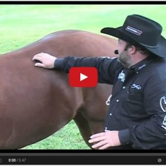Watch Revolutionary Pain Management For Horses – Great Demonstration!
