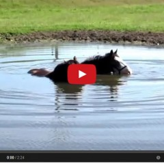 These Horses Know How To Enjoy The Summer….Blowing Bubbles In Water!