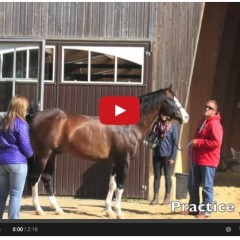 How Team USA Prepared For The World Equestrian Games – Reining