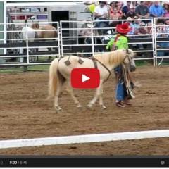 Watch The Worlds Smartest Pony Strut His Stuff!!