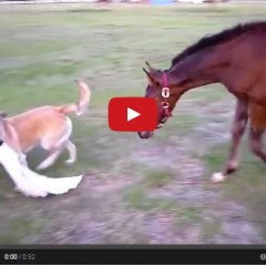 Watch Baby Horse And Dog Play Tag!!!