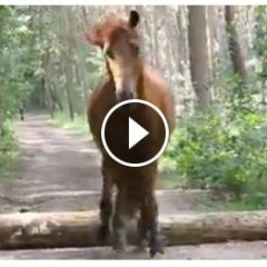 Watch The Bond Between A Woman And Her Horse Doing Freestyle!