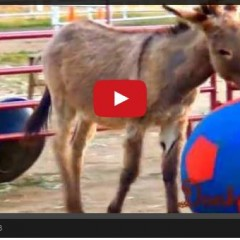 Watch The Happiest Donkey In The World Having A BALL!!!!