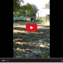 Watch What Happens When A Horse Gets A Hold Of A Pool Noodle!