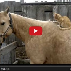 This Horse Has A Personal Masseuse And You'll Never Guess Who It Is…..