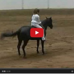 Watch Bareback Bridleless Reining – Stacy Westfall's Winning Run – Magic!