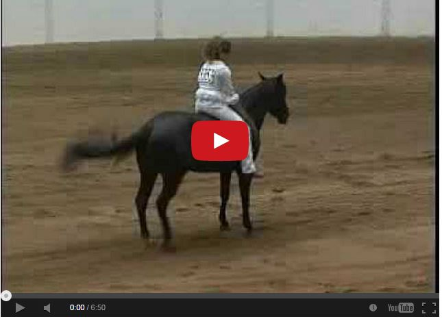 Watch bareback bridleless reining stacy westfall 39 s for West fall