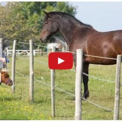Watch The Smallest Horse In England Make Friends Everywhere He Goes