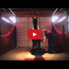 Watch And Learn – The Best Way To Propose To A Horse Woman!