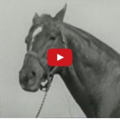 Watch A Tribute To Seabiscuit – One Of The Greatest Horses Of All Time