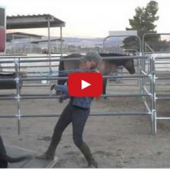 Watch Things We Do To Horses That Would Be Weird If We Did To People