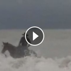 Watch Tommie Turvey Go Surfing With His Horse!