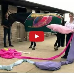 Watch An In Depth Look At Your Horse's Digestive System Using A Life Size Model