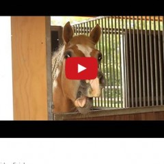Watch This Horse Yawn And I Bet You'll Smile