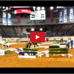 Watch Highlights From AQHA World Championship Horse Show!