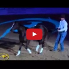 Watch Clinton Anderson And His Horse Mindy – This Relationship Is Magical!