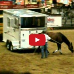 Watch How To Load A Horse In The Trailer – Problem Horses – Clinton Anderson