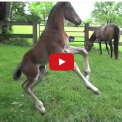 Watch This Silly Foal Frolic In A Field And Have A Blast!