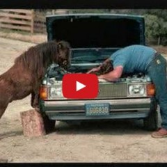 Watch These Funny Horses And Give Yourself A Laugh!