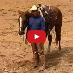 Watch How To Teach Your Horse To Ground Tie – Craig Cameron