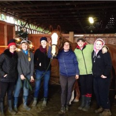 If Every Barn Rescued A Horse For Christmas What Would Happen?
