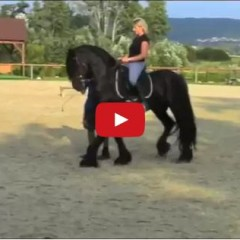 Watch This Woman Ride A Friesian Stunt Horse For The First Time