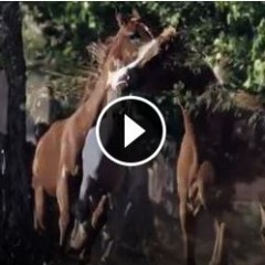 Watch This Breathtaking Video Of Horses In Slow Motion – Magical!