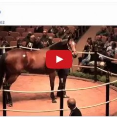 This Horse Sold For 10 Million Dollars…As A Broodmare Prospect!