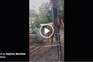 horse ring tone