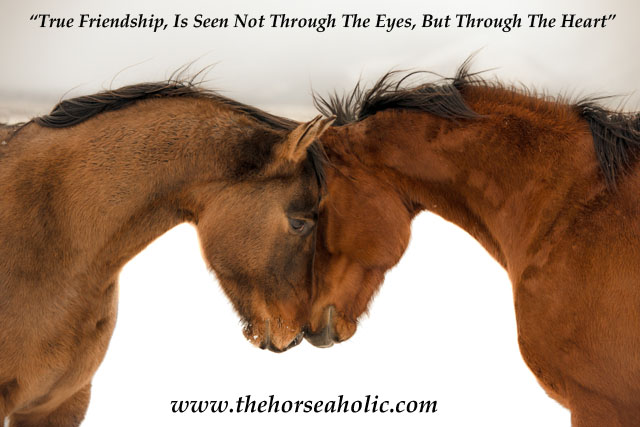 Horses love greeting