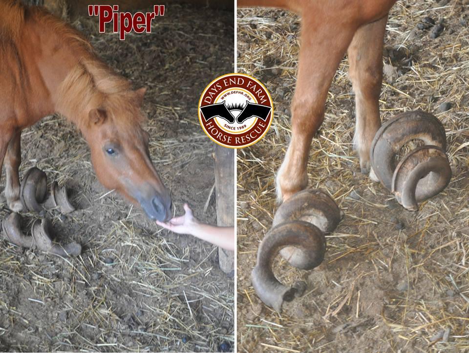 Days End Farm Horse Rescue