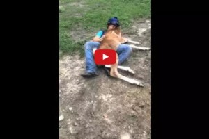 foal acts like dog