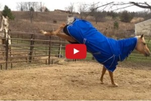 horse temperature drop dance 2