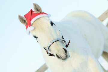 horse with santa hat Christmas