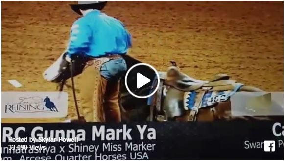 horse gives lays down during nrha futurity finals
