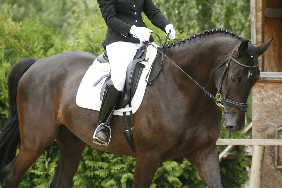 Unknown Rider Sitting On A Dressage Horse