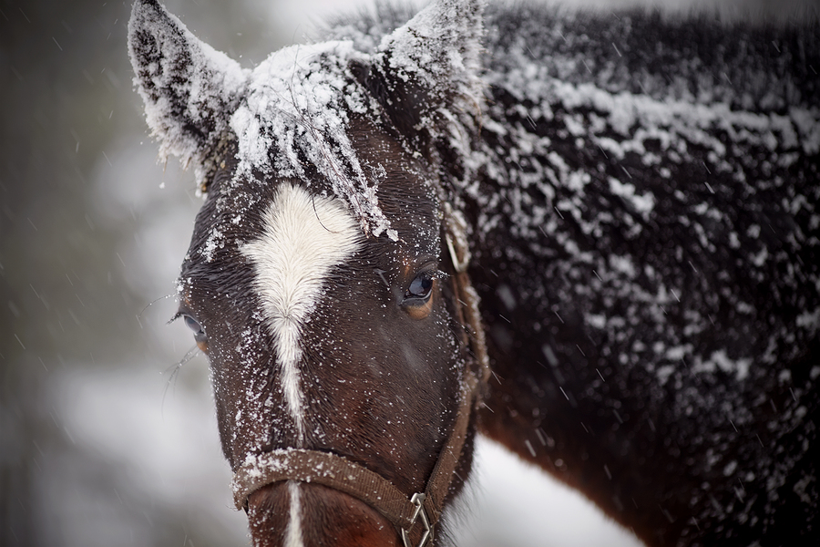 Wet Sad Brown Horse In Snow.