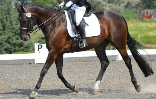confessions of a dressage scribe