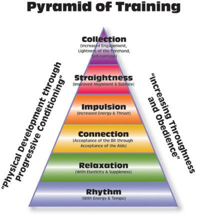 Pyramid of Training as defined by the United States Dressage Federation (USDF.org)