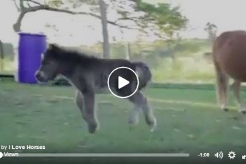 mini foal runs