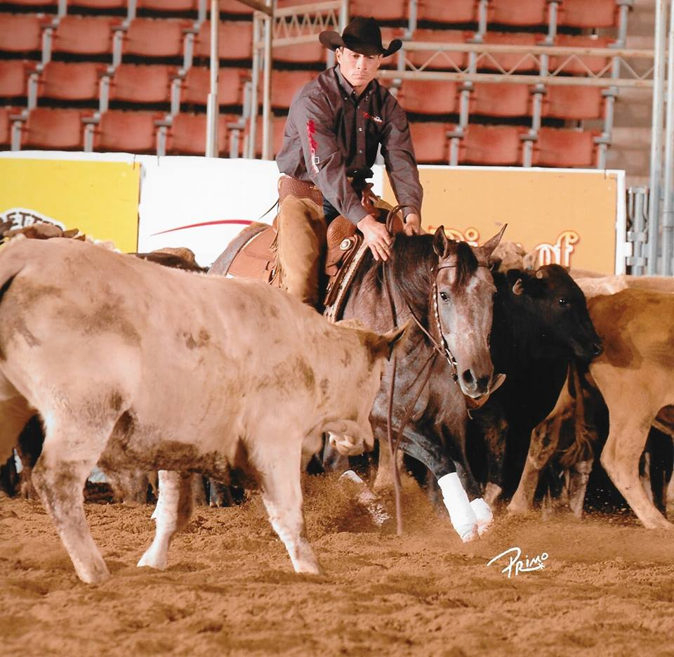 Zane Davis Performance Horses Facebook