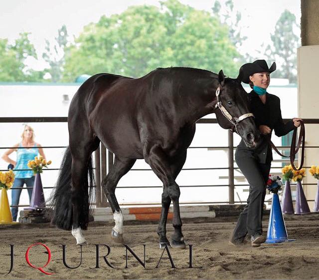 Madelyn Reese showing My Socks R Rocking. Photo Credit: AQHA Journal