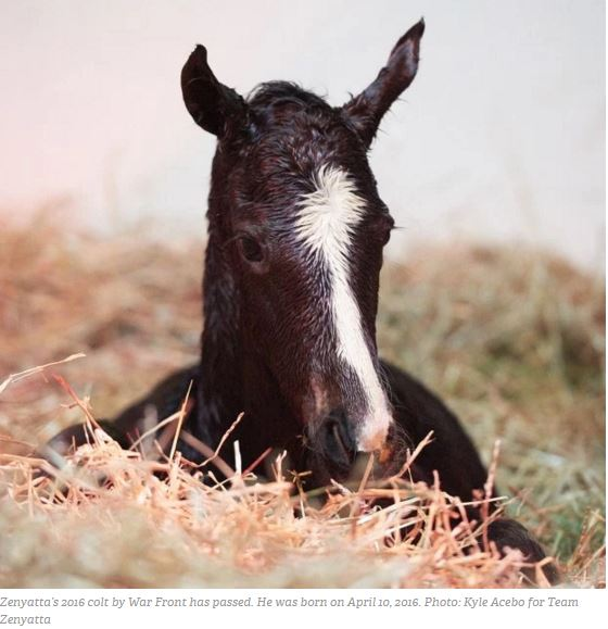 1 1 1 1 1 1 zenyatta foal dies